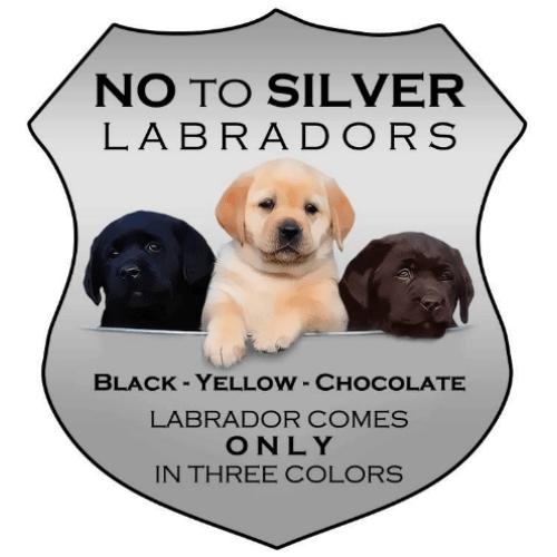 Silver Lab Vs Weimaraner